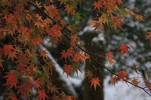 英彦山の紅葉.jpg