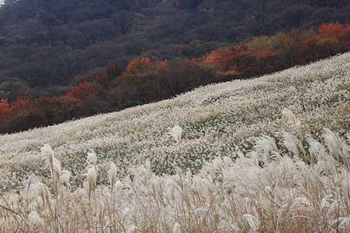 英彦山の紅葉
